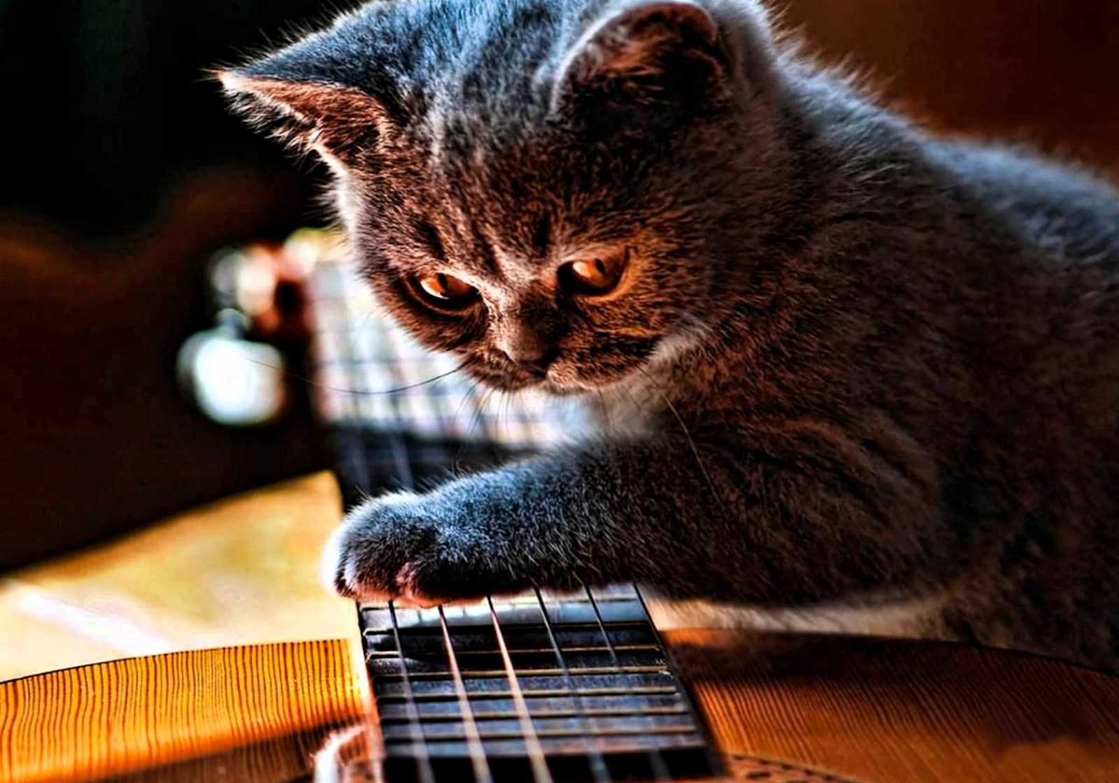 https://02varvara.files.wordpress.com/2015/03/00-cat-with-guitar-09-03-15.jpg