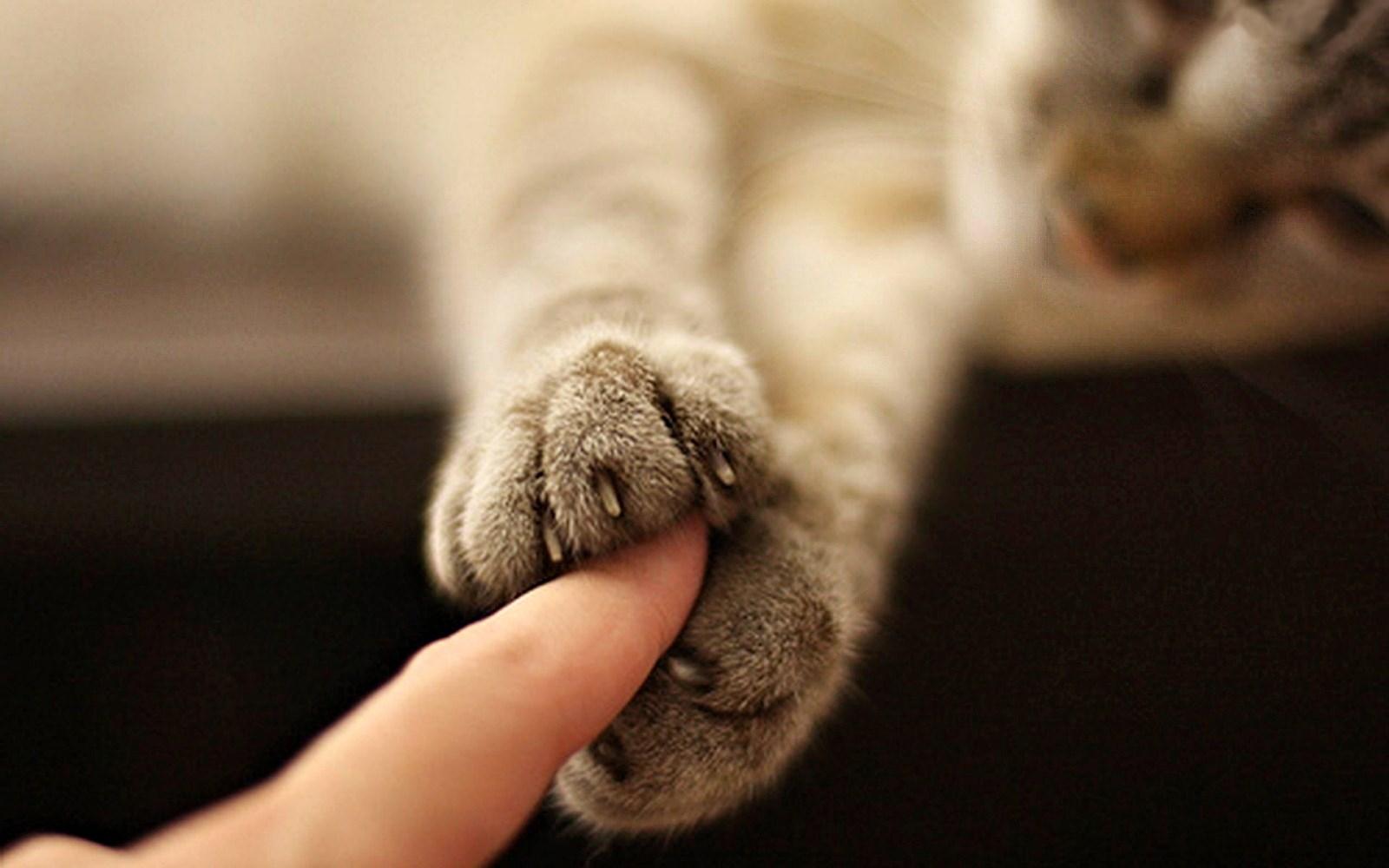 00 cat love. 08.04.15