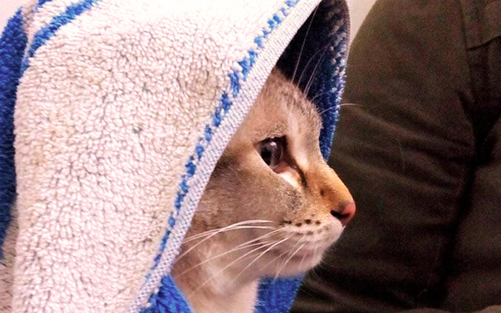 00 cat Obi Wan. 07.04.15