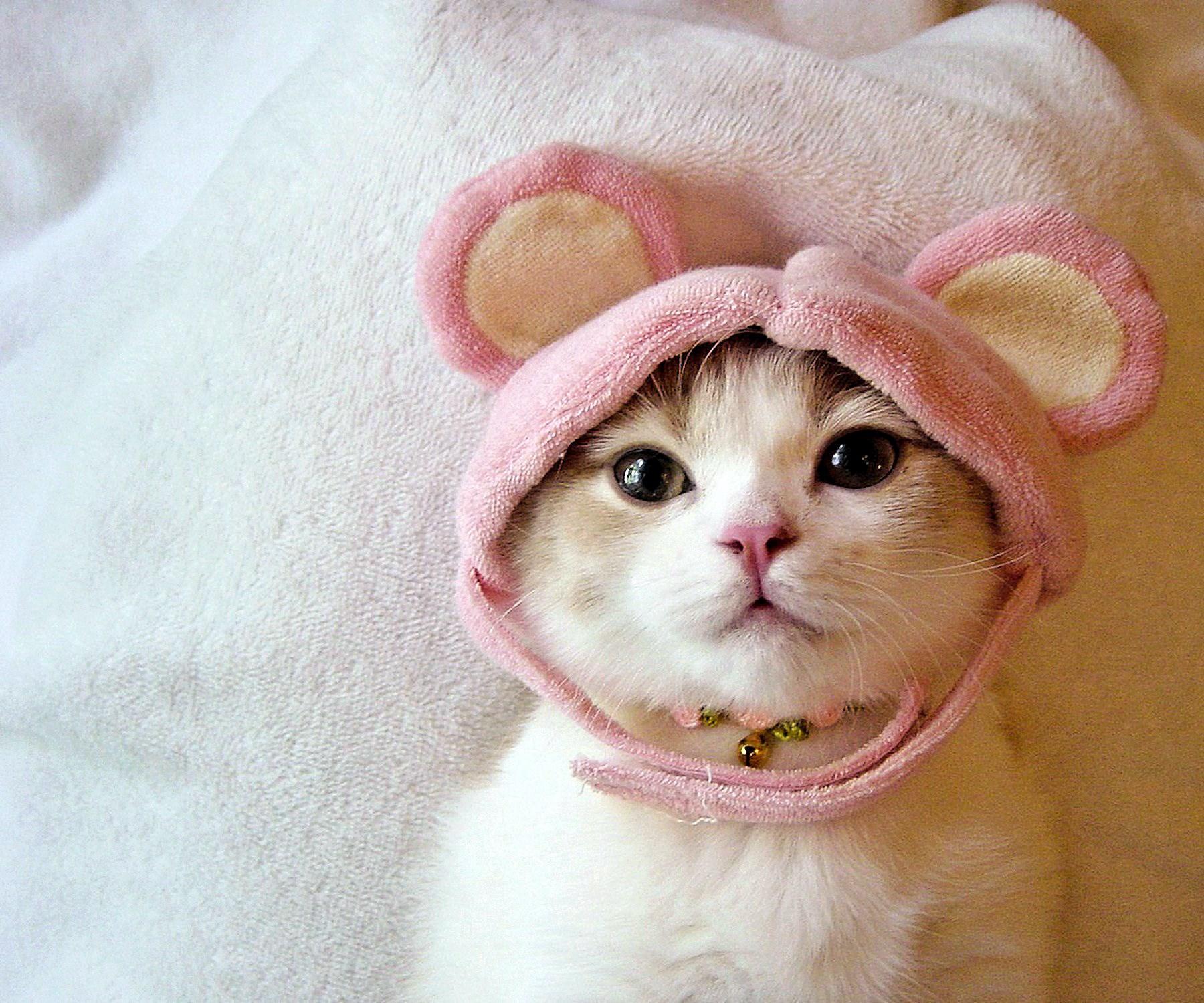 00 ain't I a cute cat... 13.05.15