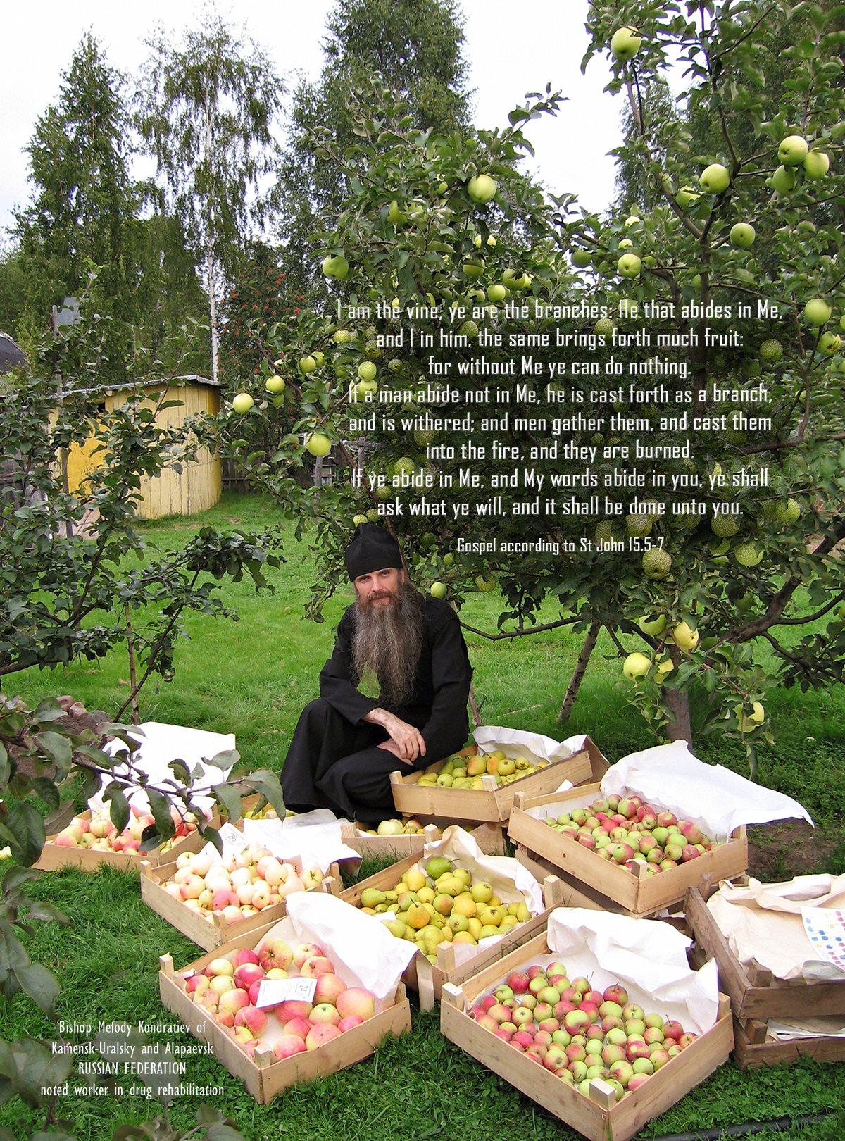 00 Bp Mefody Kondratiev. Russia. apple tree. 21.05.15