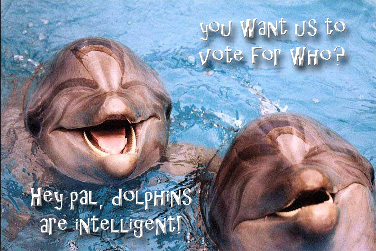 00 dolphins 290615