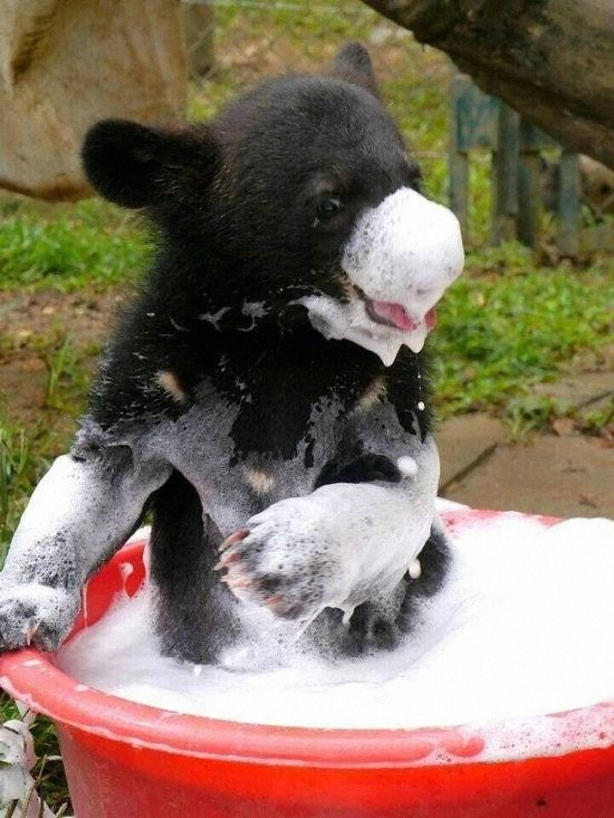 00 animals bath 01. 280715