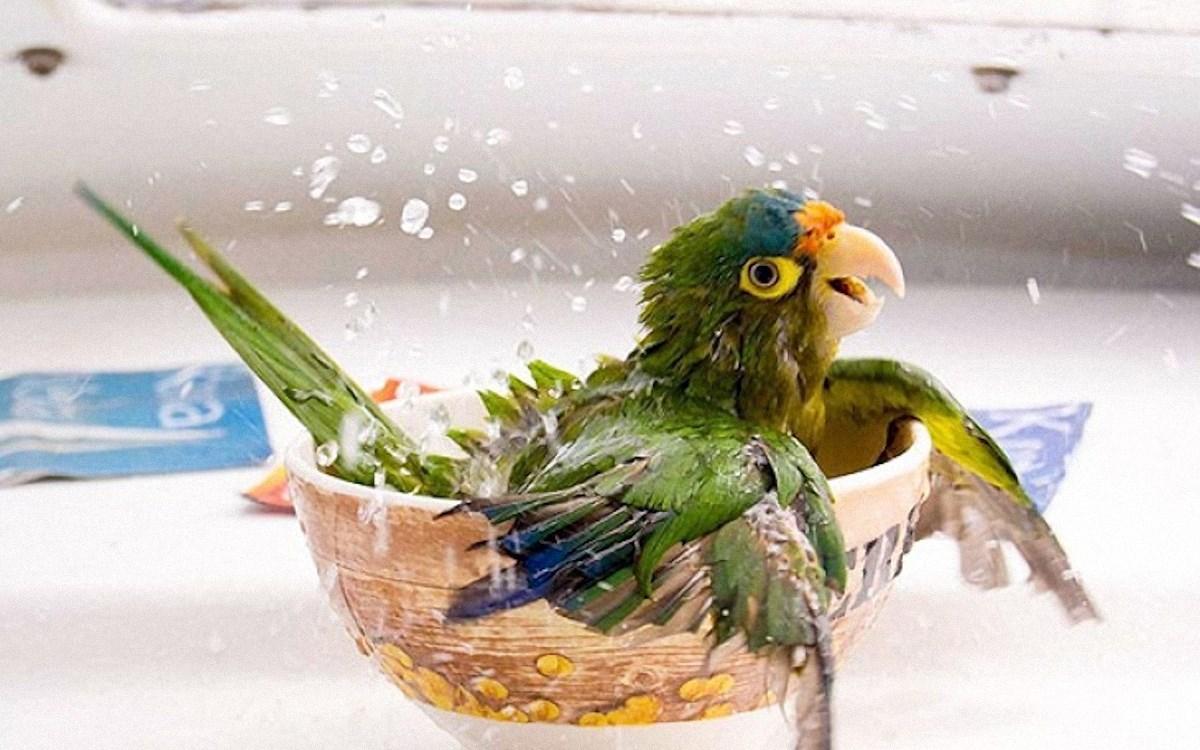 00 animals bath 02. 280715