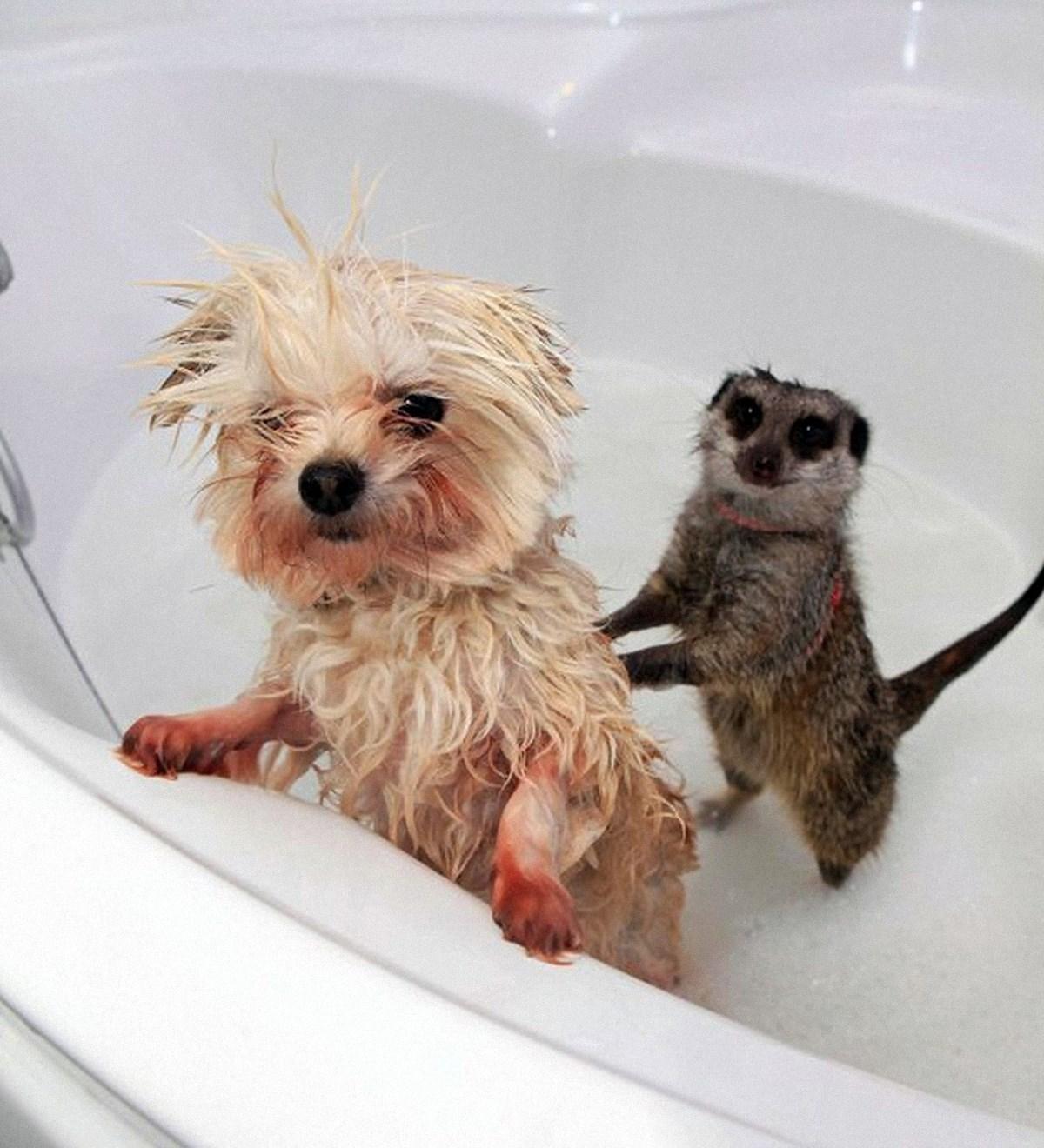00 animals bath 03. 280715