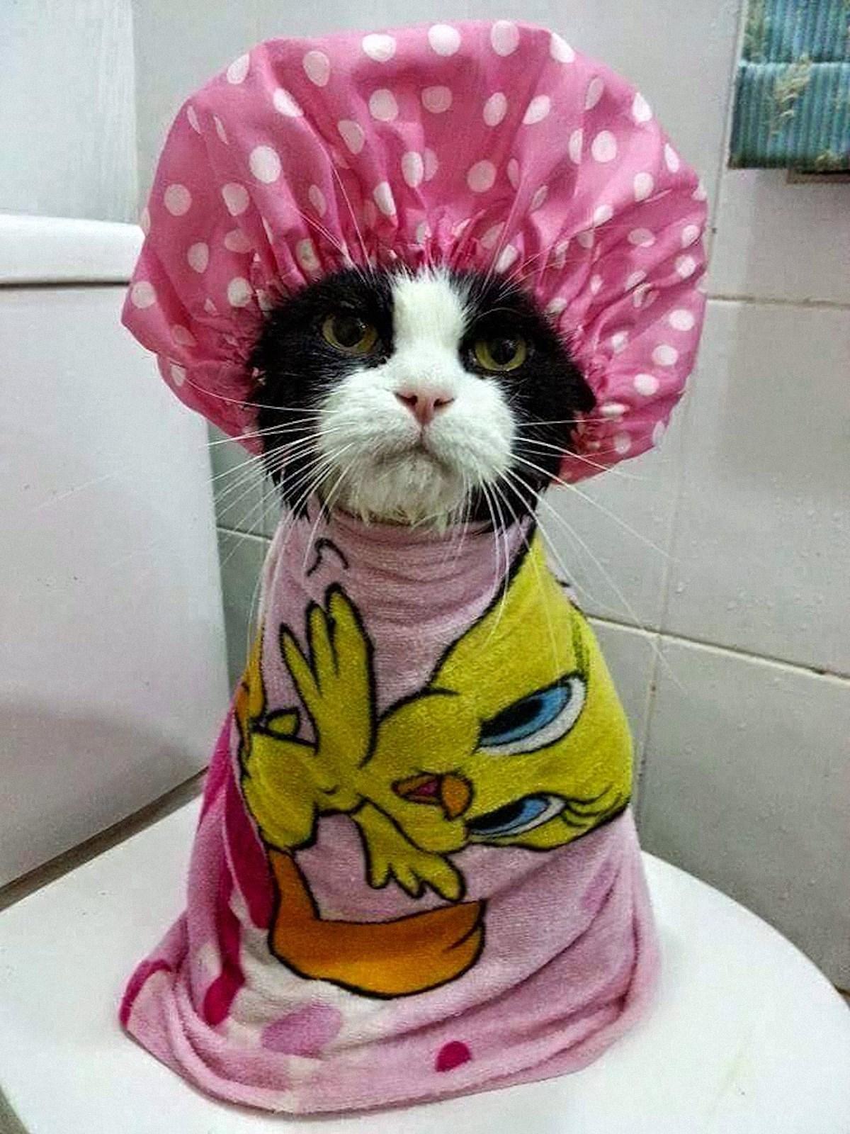 00 animals bath 04. 280715