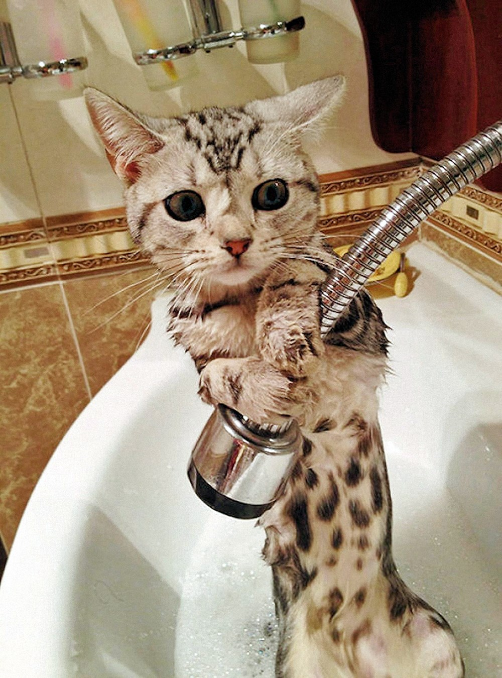 00 animals bath 05. 280715