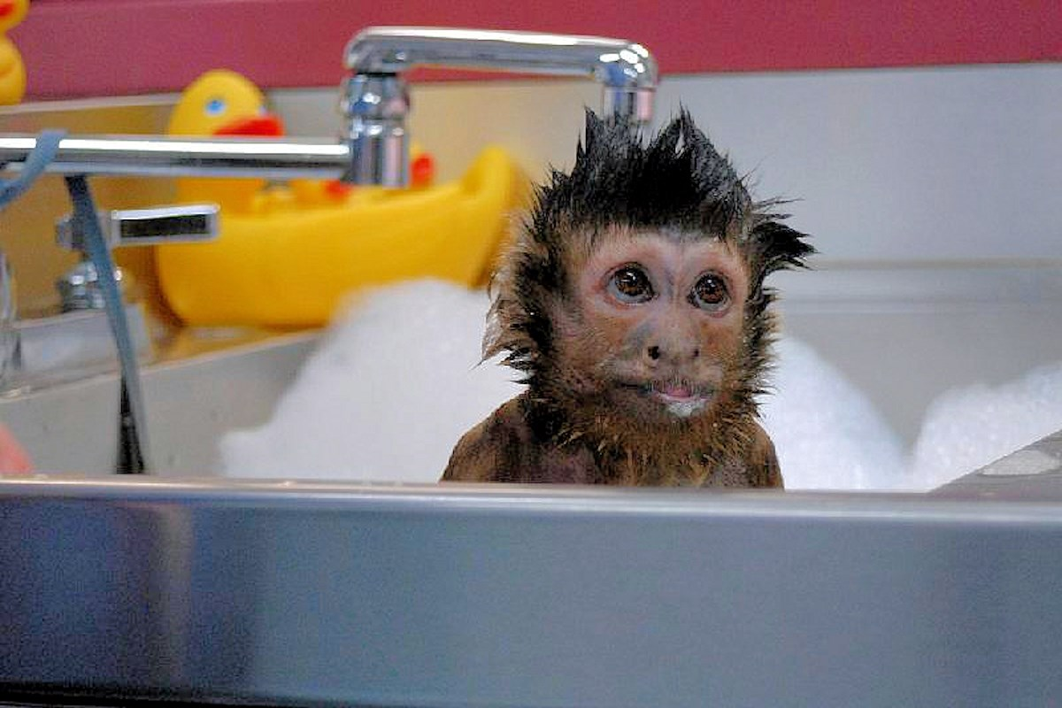 00 animals bath 06. 280715