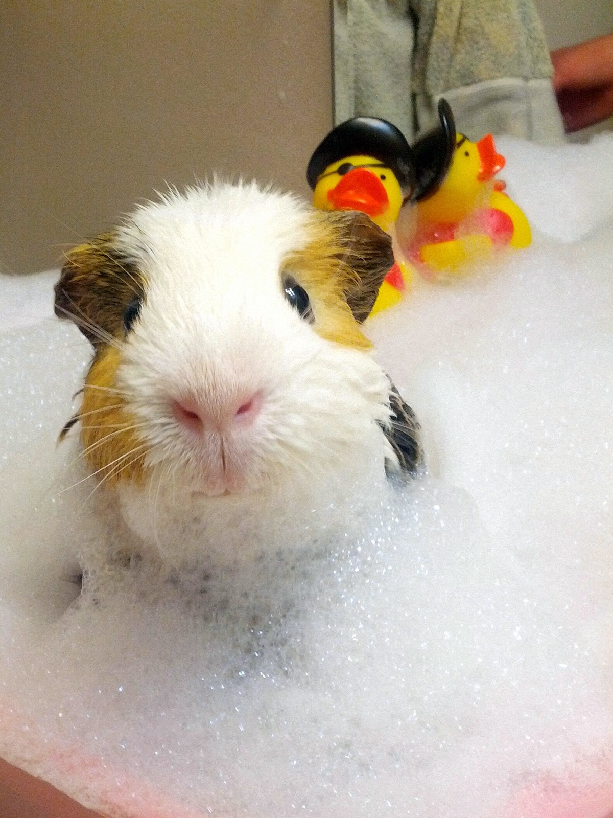 00 animals bath 07. 280715
