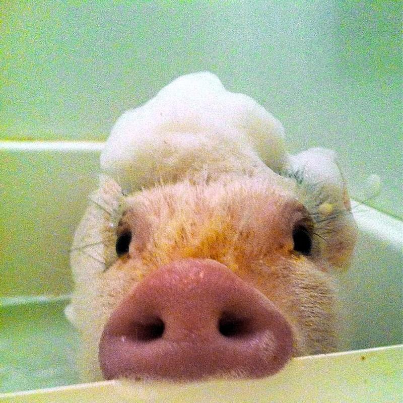00 animals bath 08. 280715