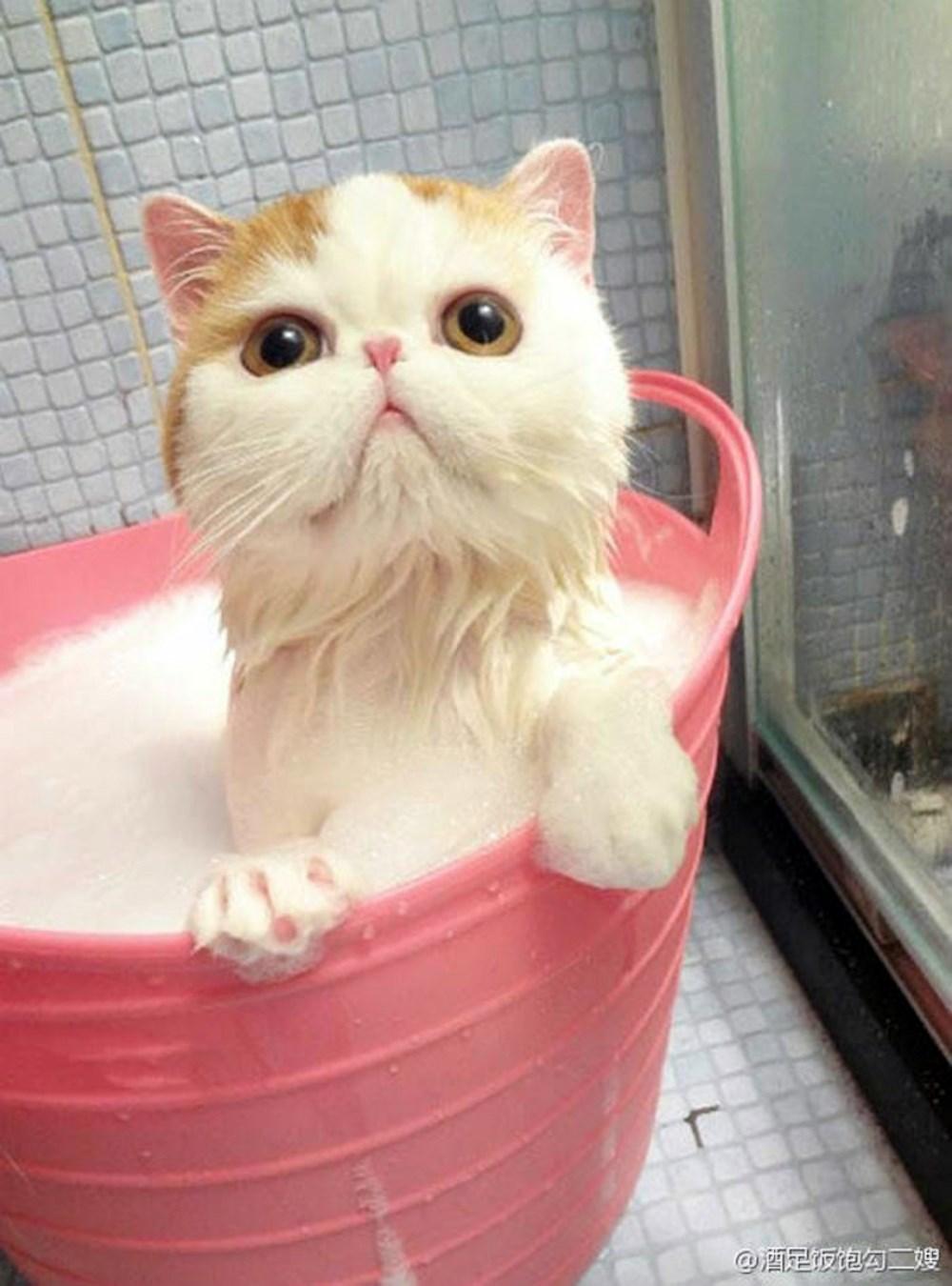 00 animals bath 10. 280715