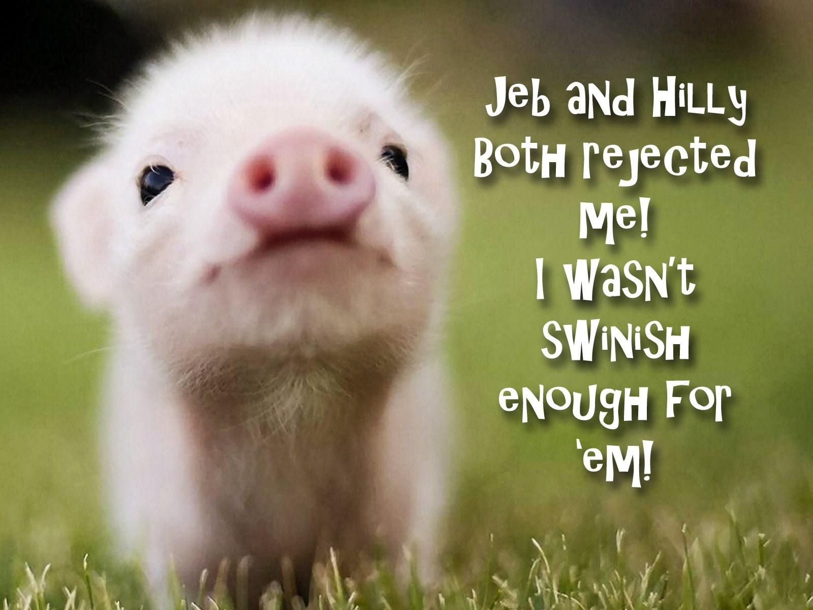 00 baby pig. 160715