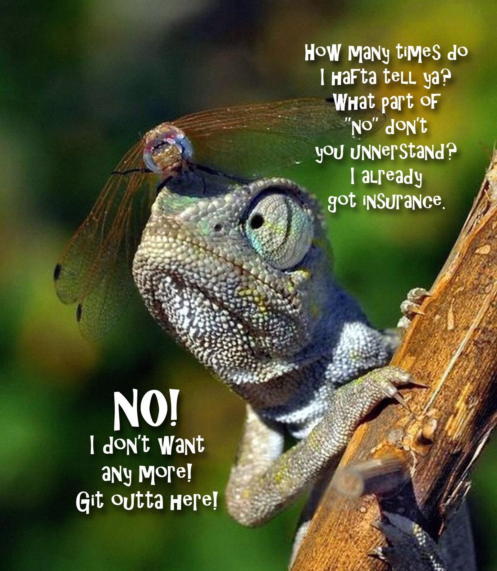 00 animal funnies. no! I don't want any! 070815