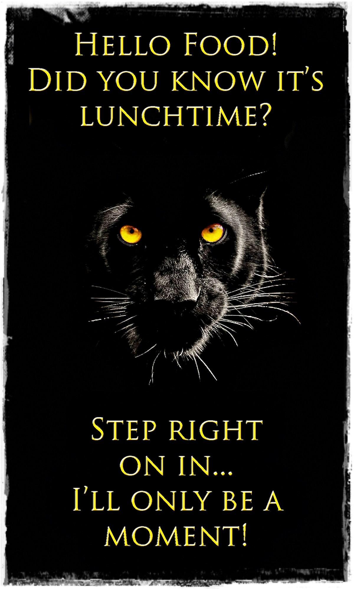 00 black jaguar 220815
