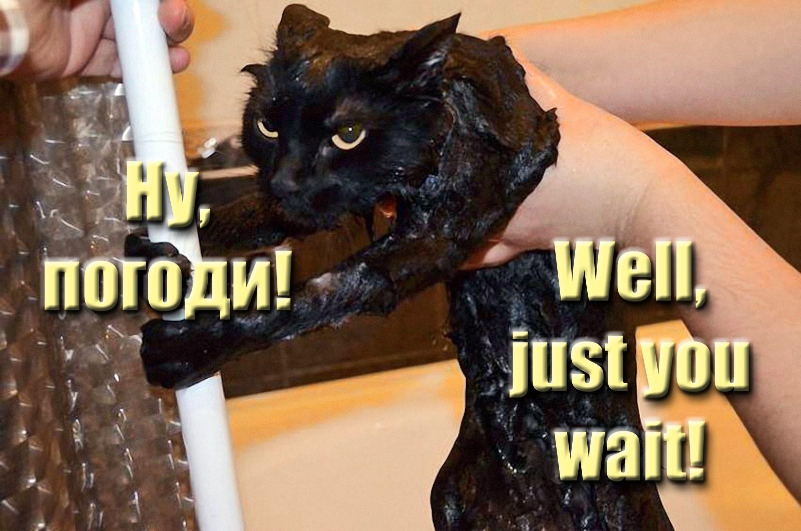 00 cat just you wait 110815