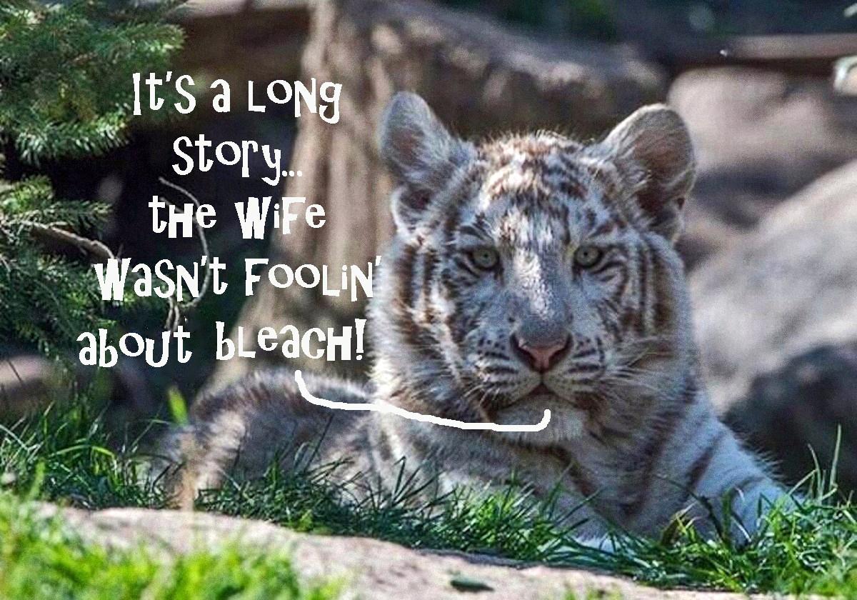 00 white tiger bleach 250815