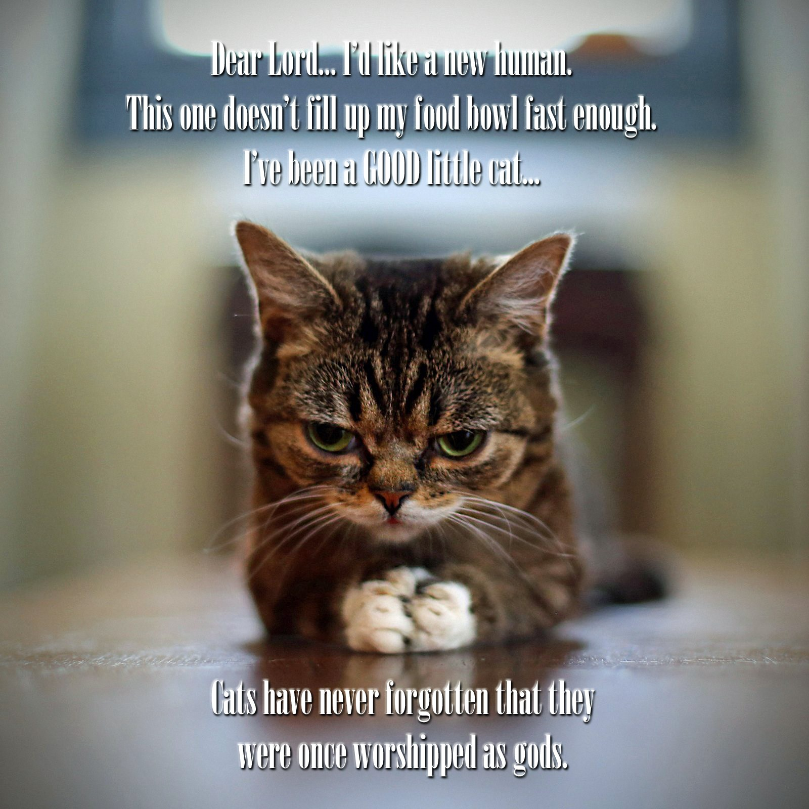 00 cat 140915