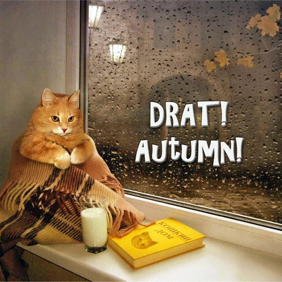 00 cat drat autumn 190915