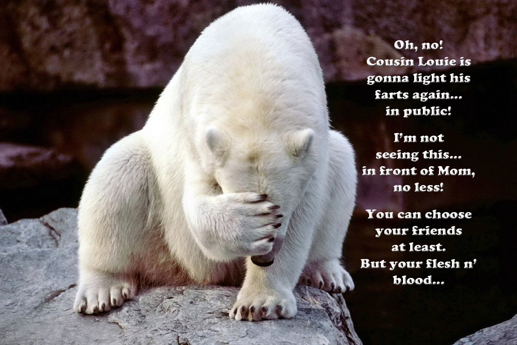 animal funnies you can choose your friends at 00 facepalm bear you can choose your friends 080915