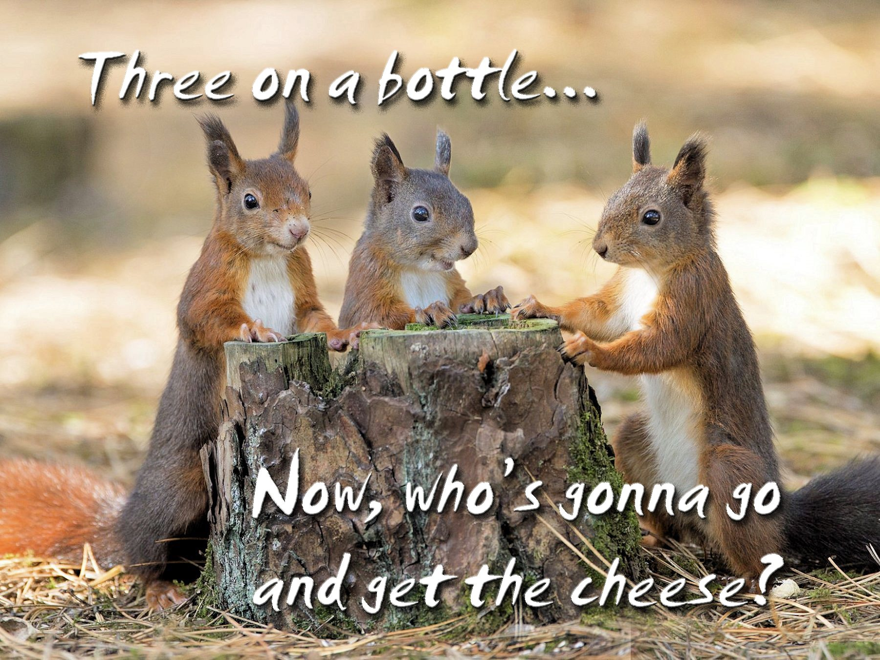 00 three squirrels 290815
