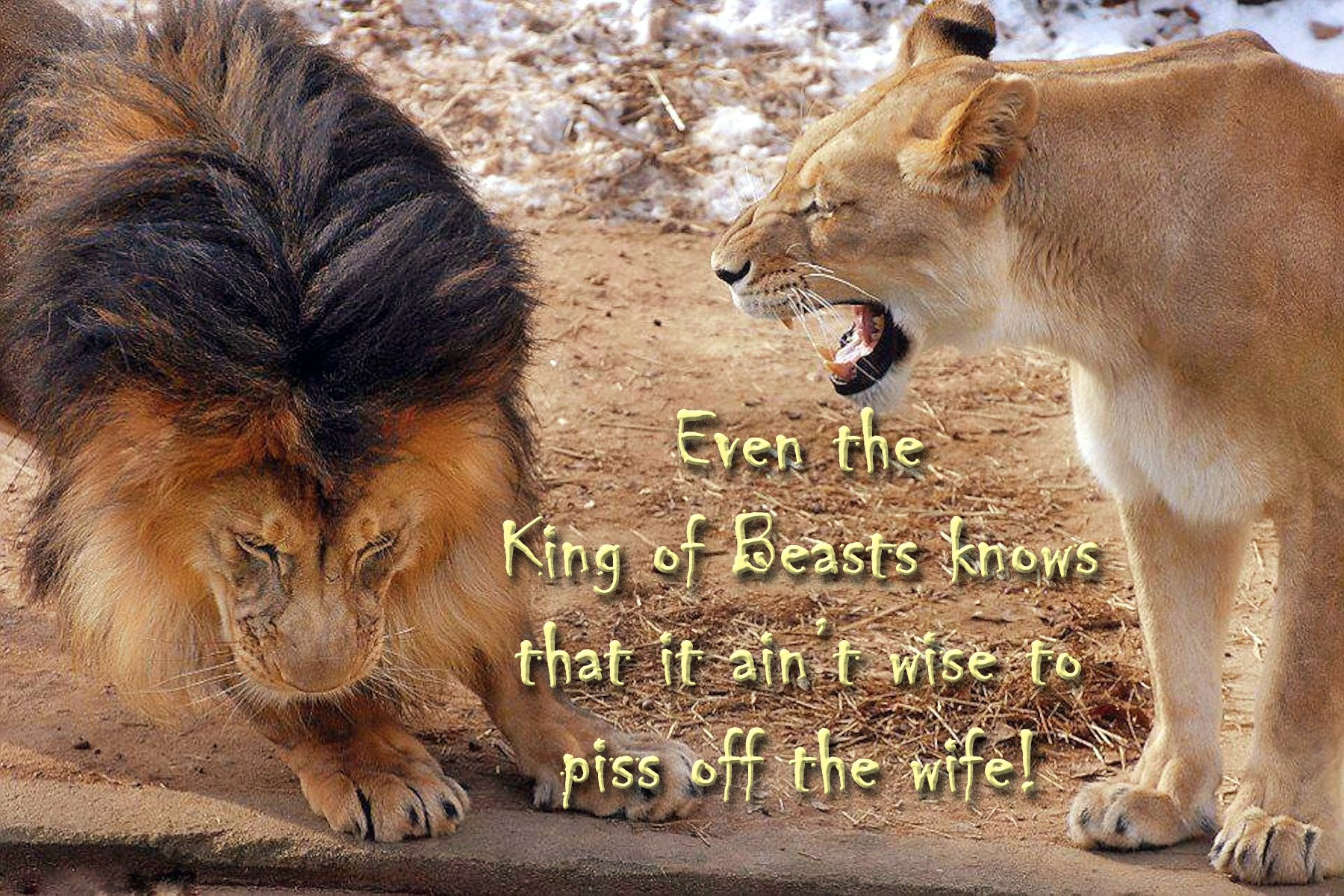 00 lioness and lion 211015