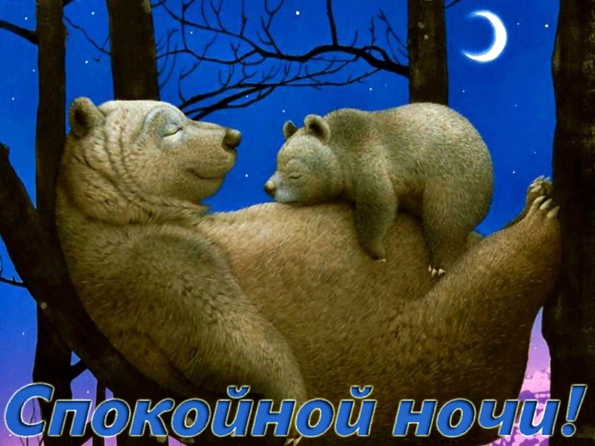 00 bear and cub sleep tight 261115