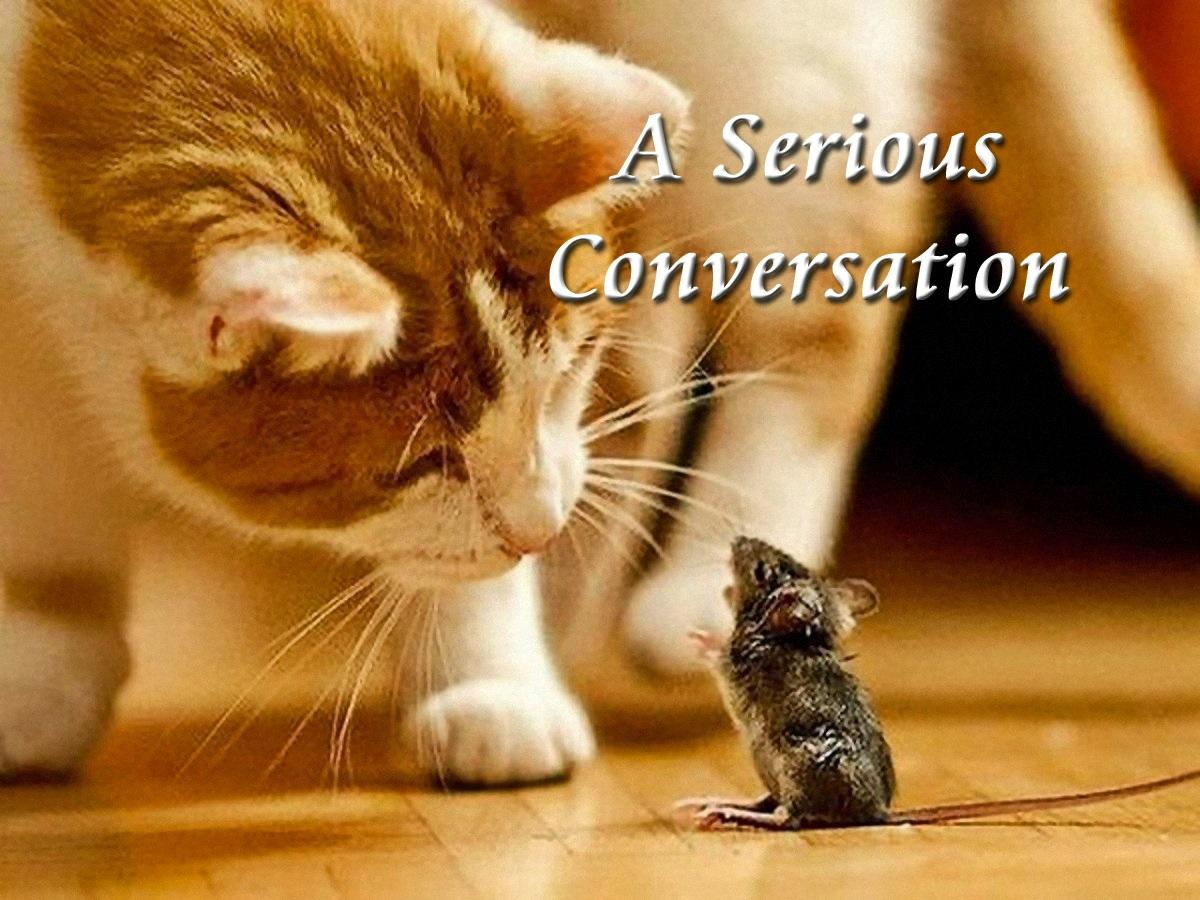 00 cat a serious conversation 161115