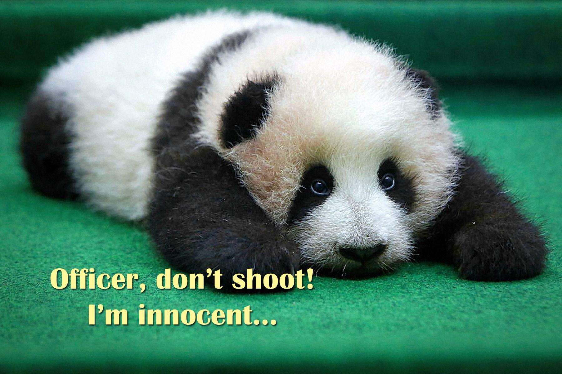 00 panda 281115