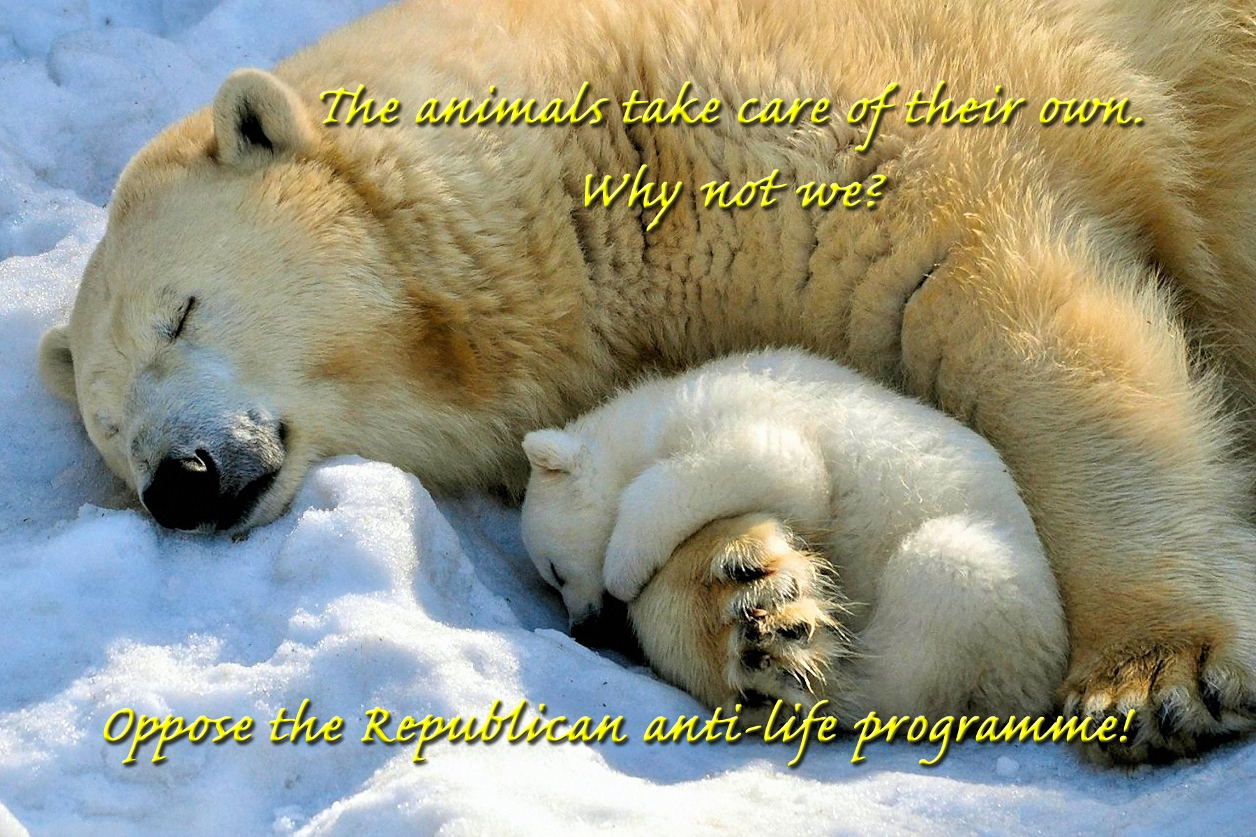 00 polar bear and cub... 211115