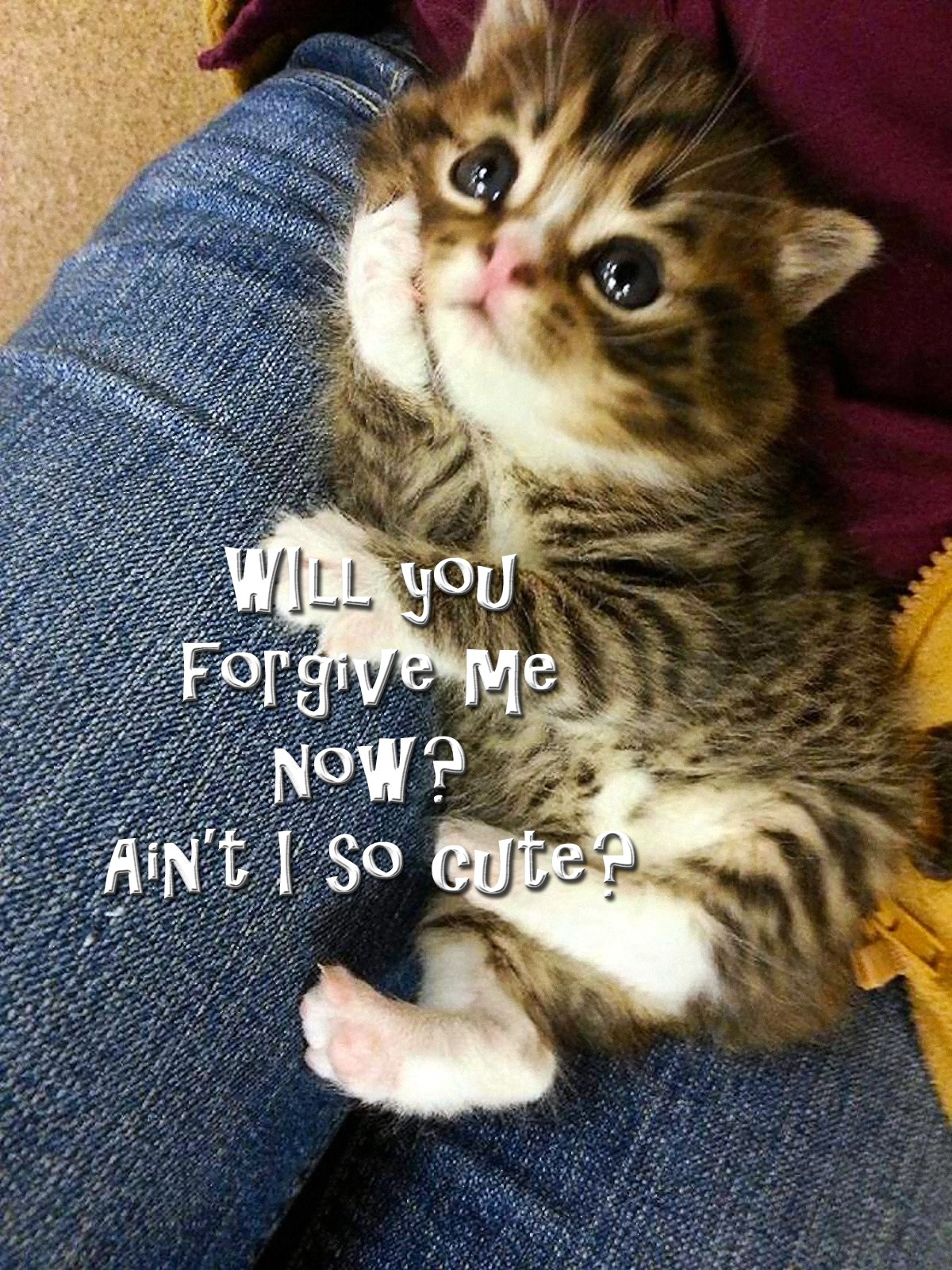 00 will you forgive me now. cat 301115