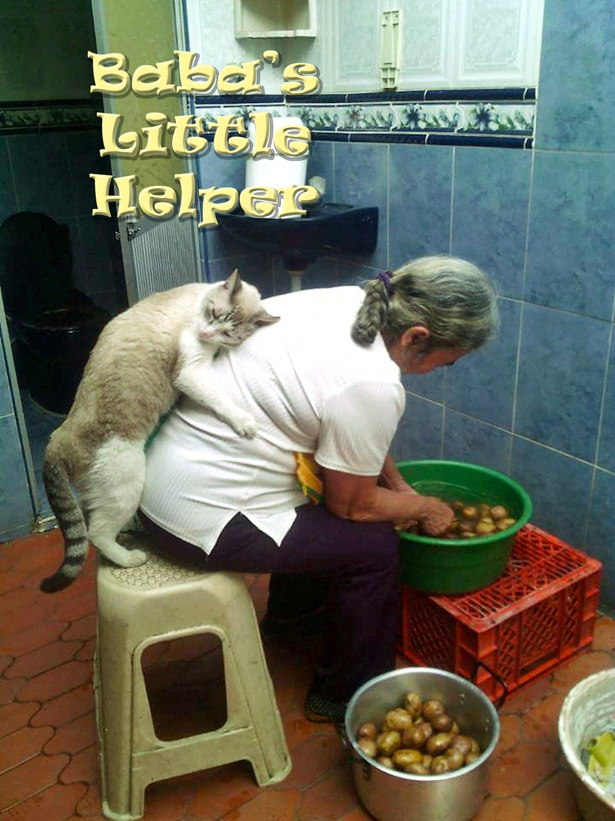 00 cat babas helper 121215