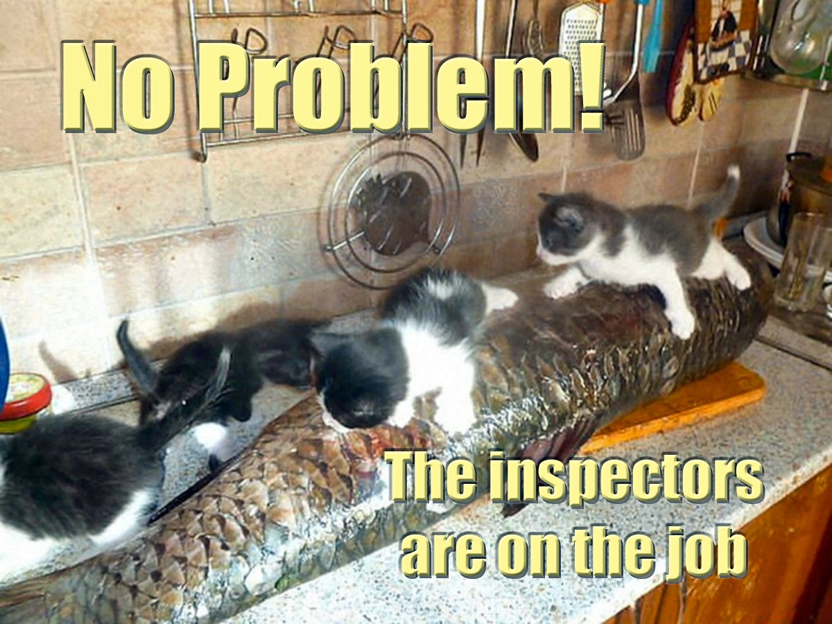 00 cats kittens the inspectors 131215