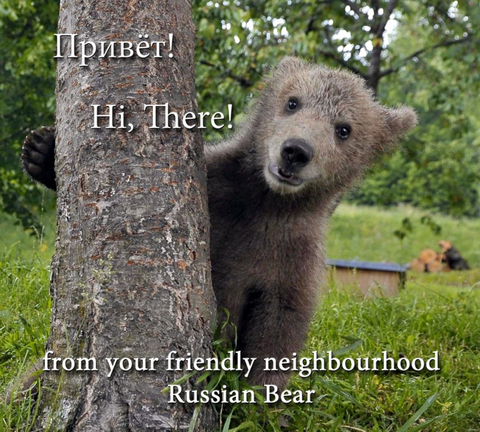 00 hi there from your russian bear! 051215