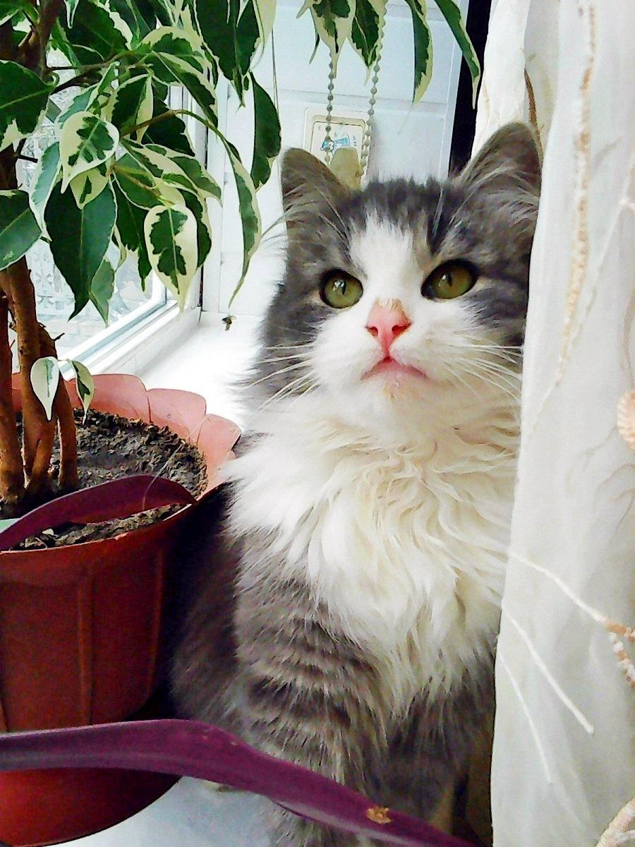 00 russian cat 261215