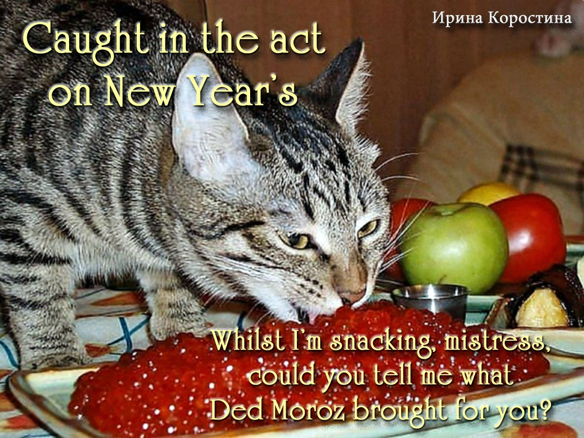 00 new year cat 090116