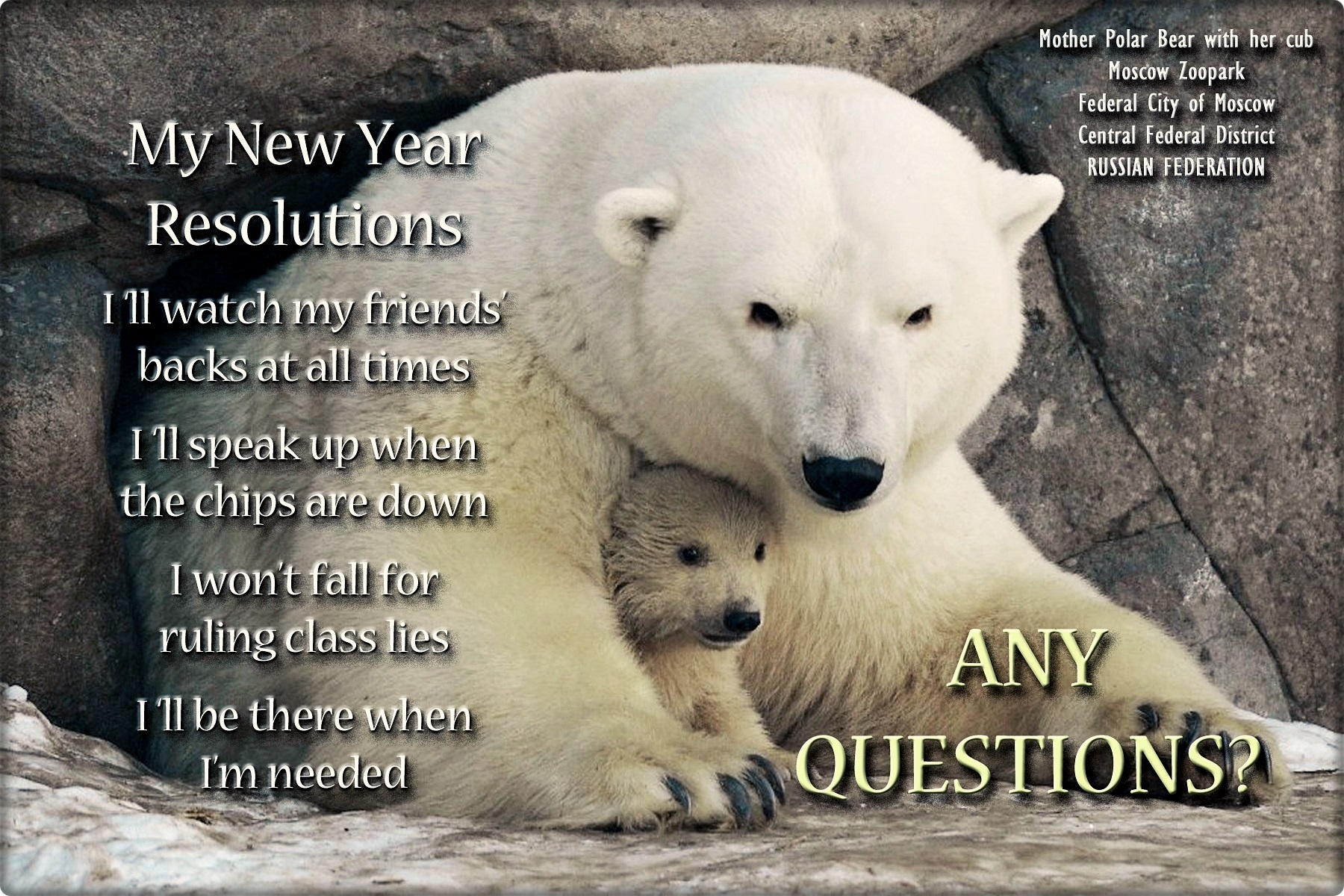 00 polar bear new year resolutions 020116