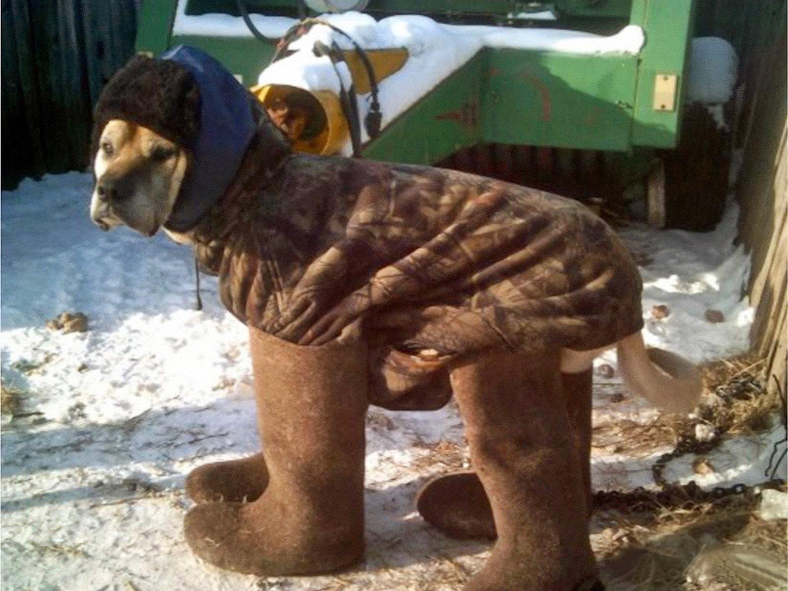 00 polish dog in winter 140116