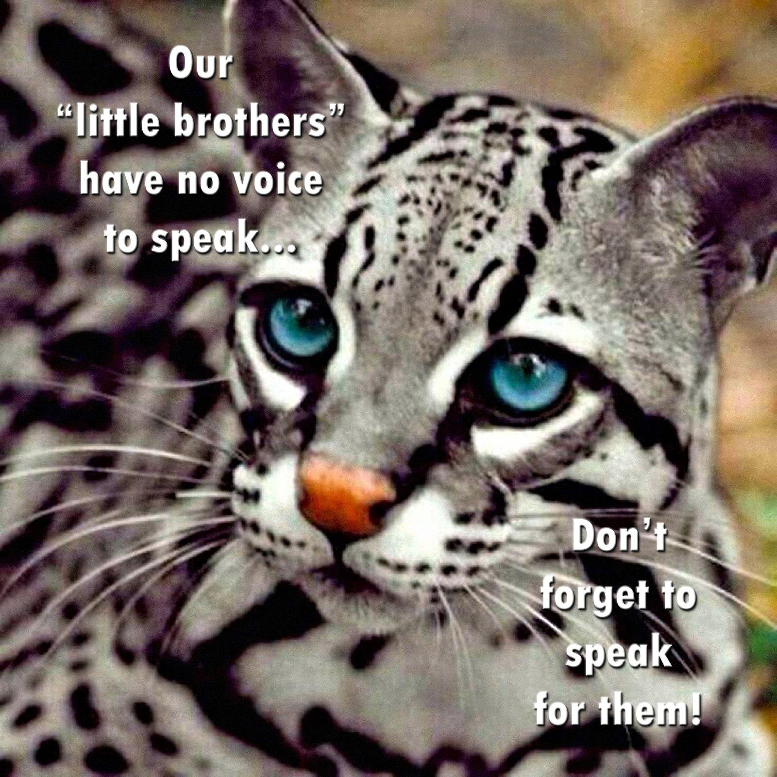 00 wild cat russia 200216