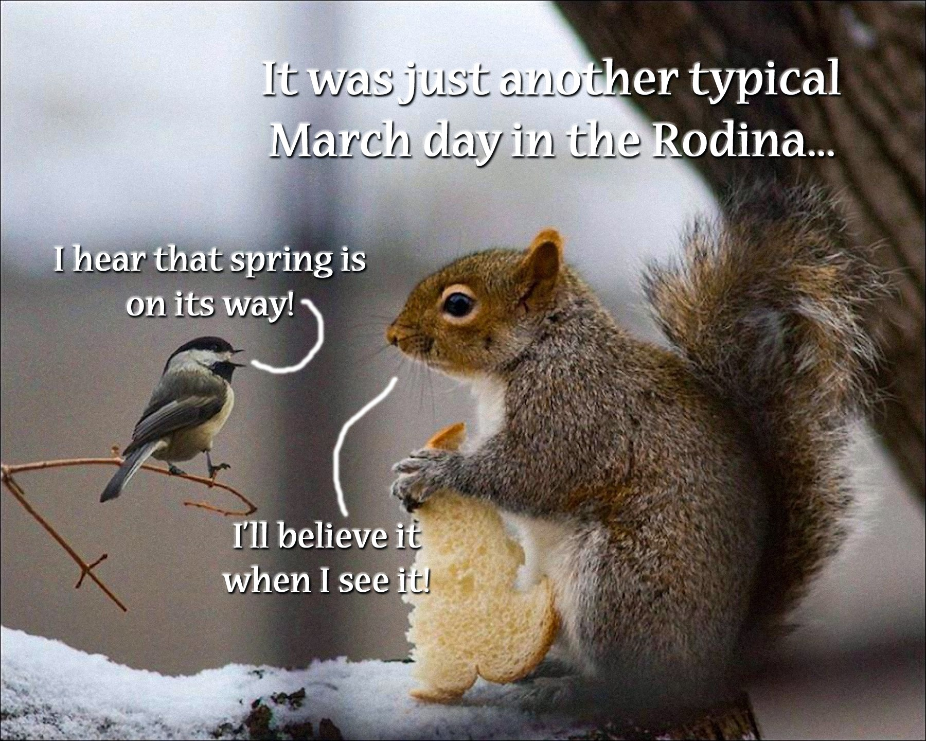 00 bird and squirrel 090316