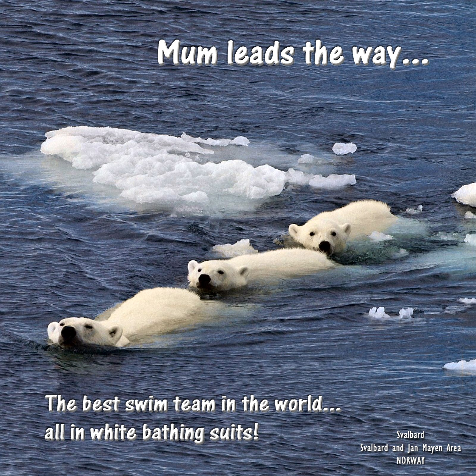 00 polar bears in arctic 200316