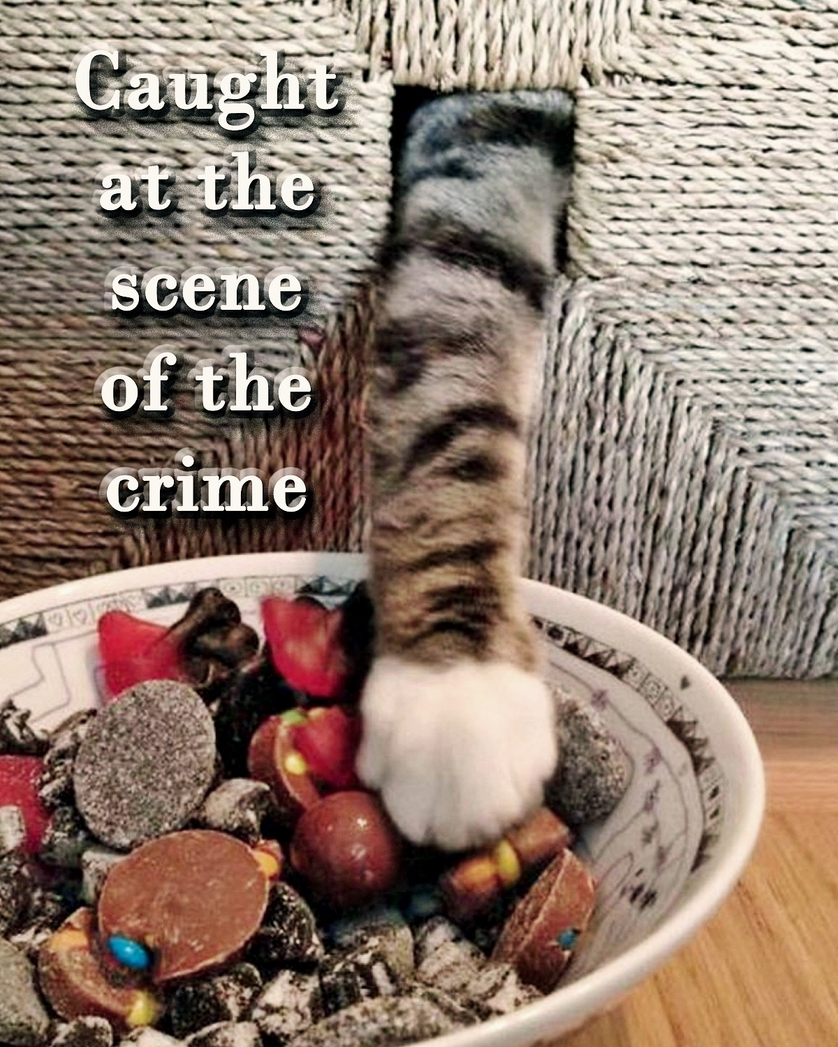 00 cat at the scene of the crime 070416