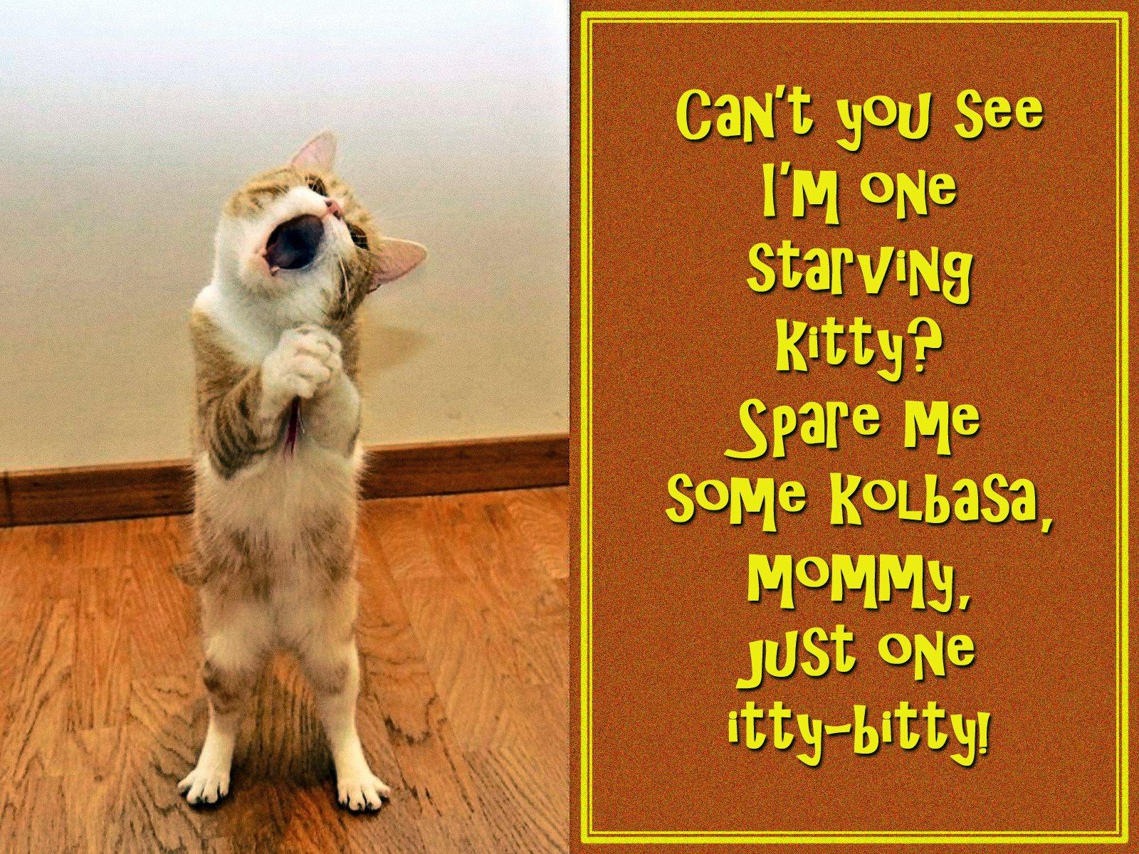 00 cat begging 100416