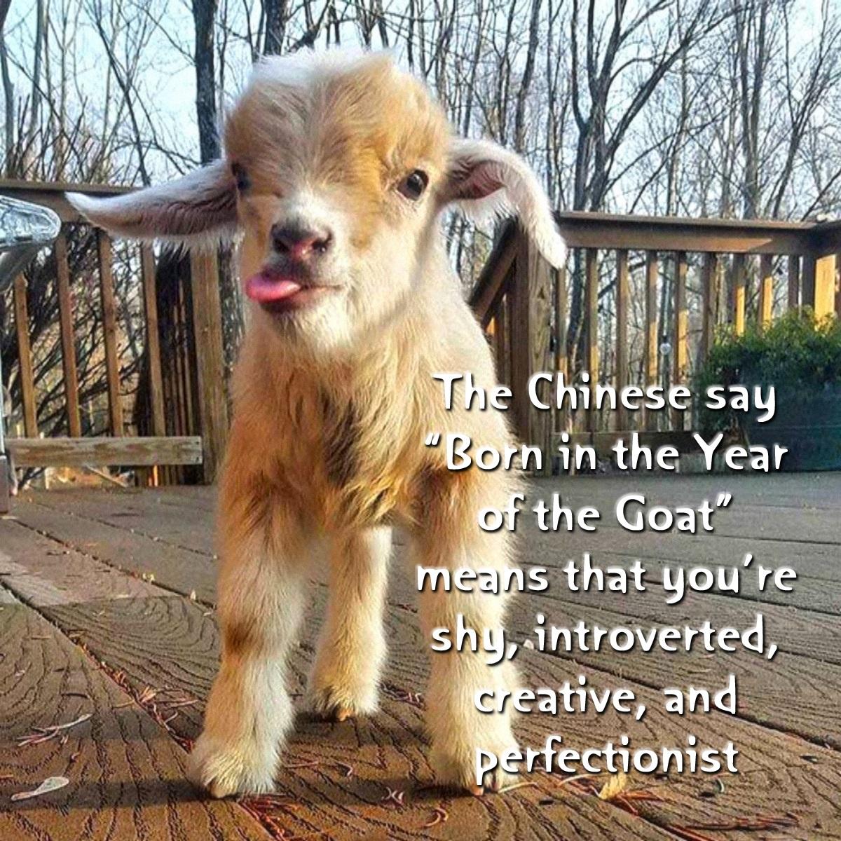 00 goat 090416