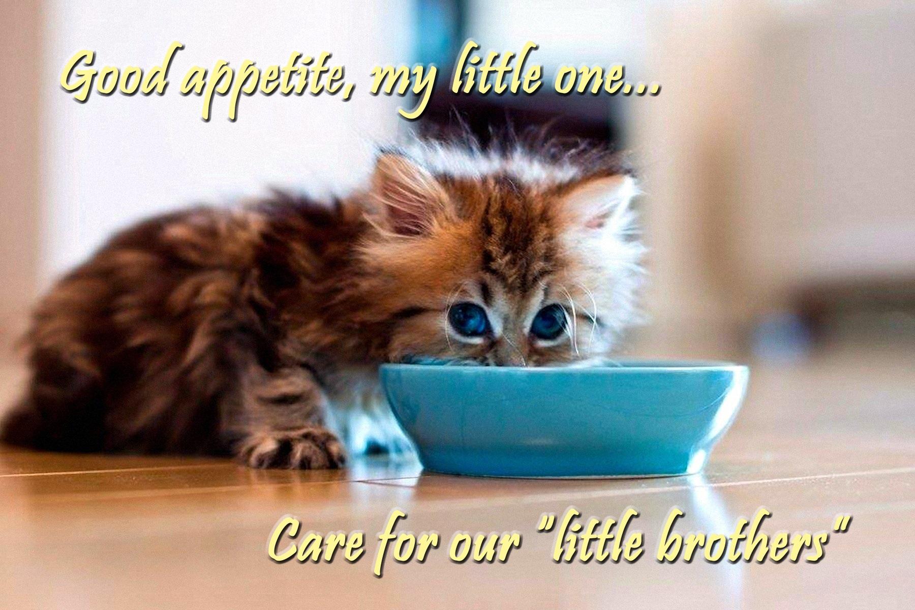 00 kitten 020416