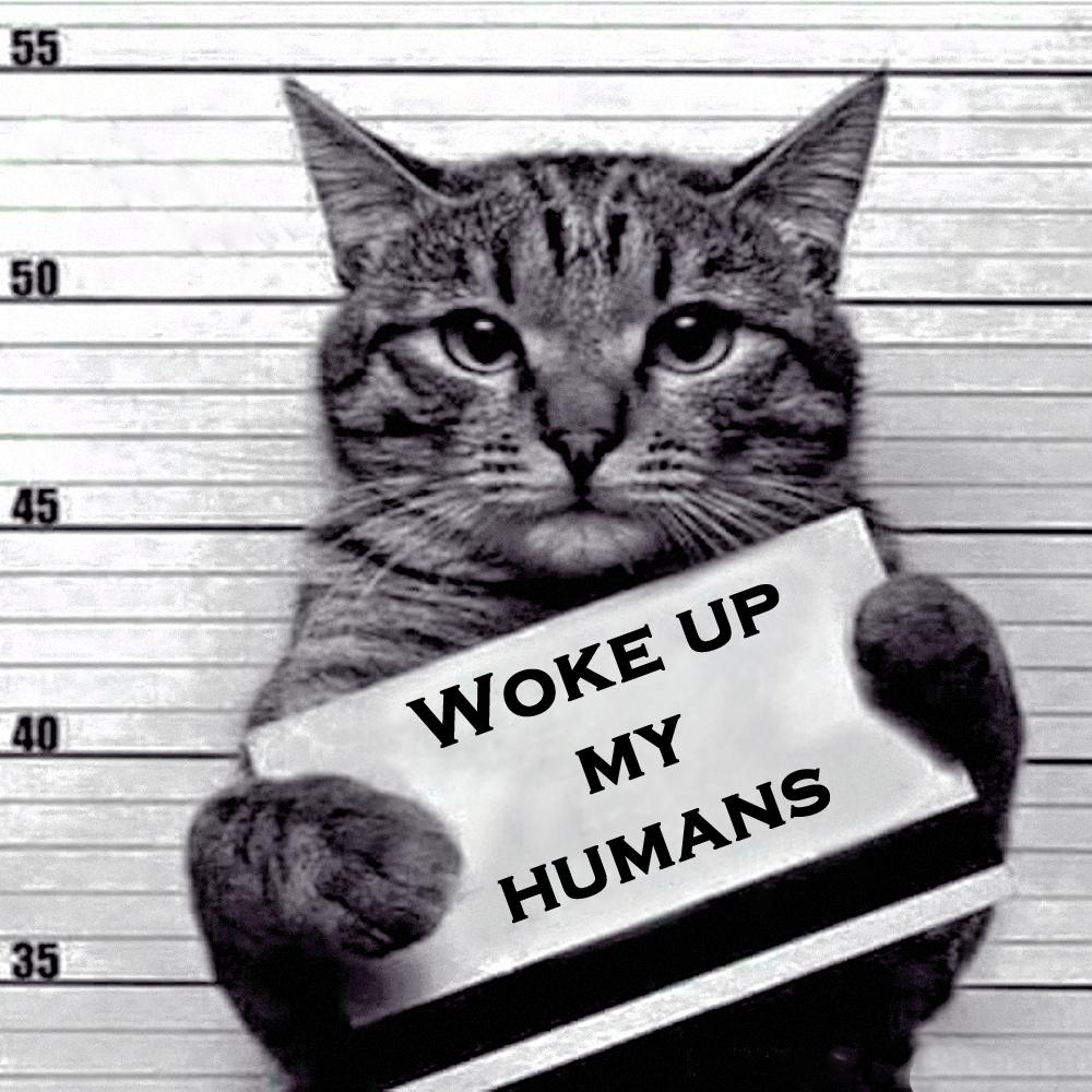 00 a feline recidivist 02 280516