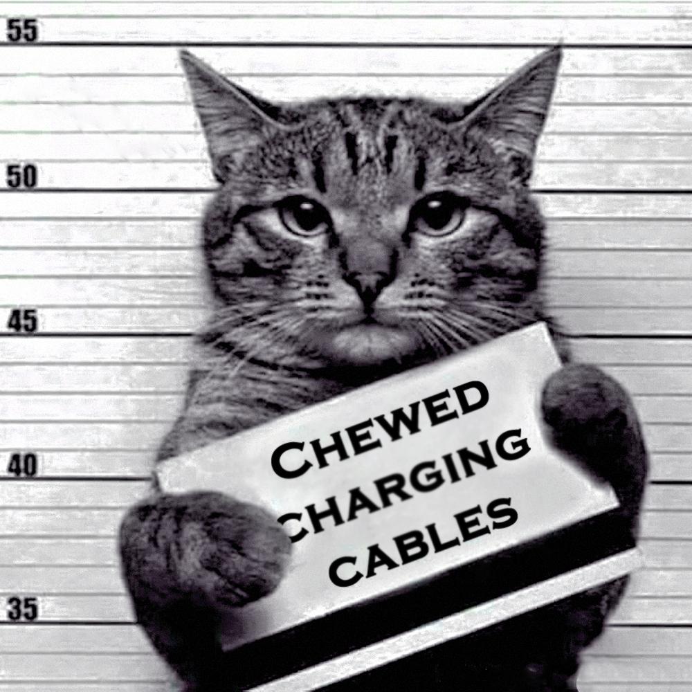 00 a feline recidivist 03 280516