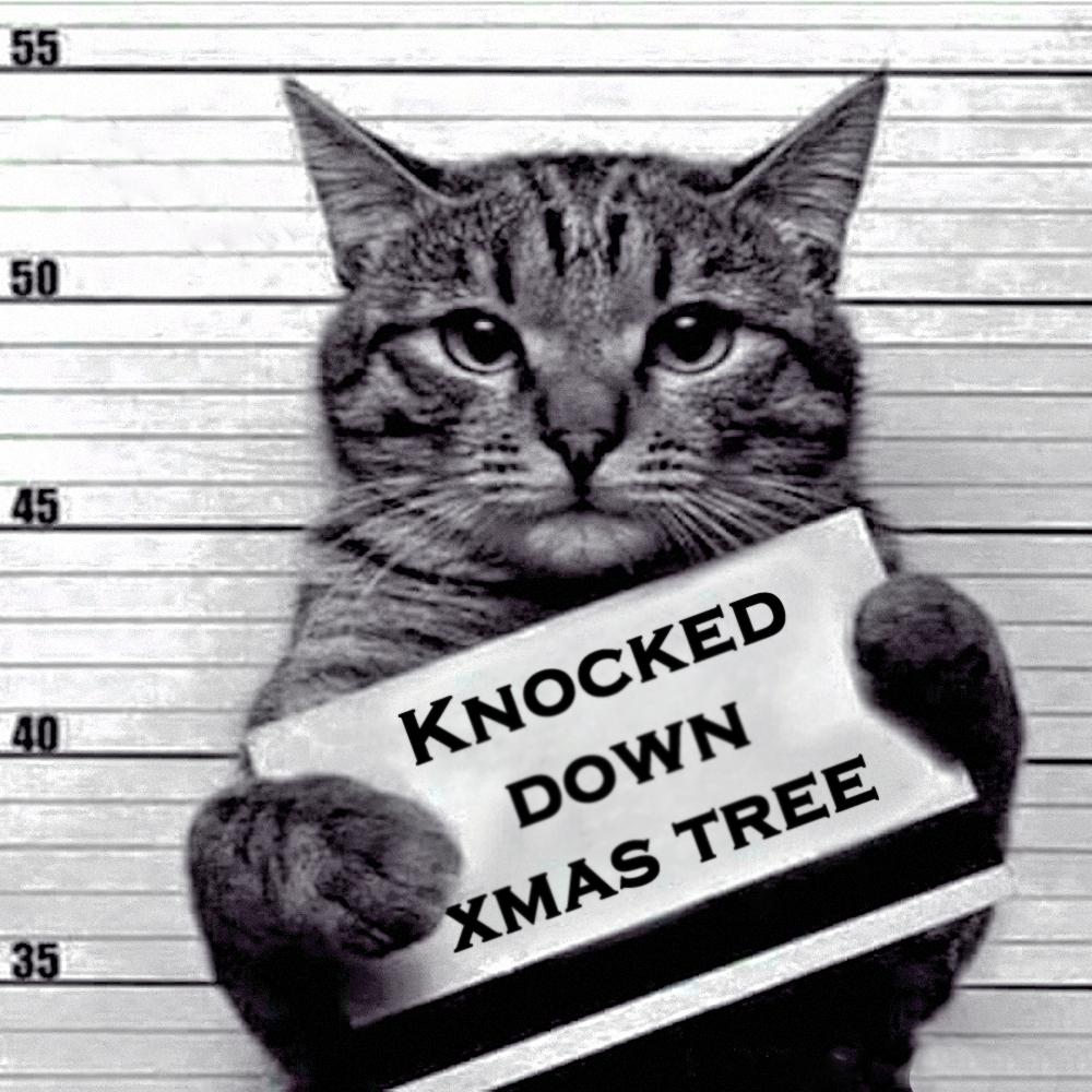00 a feline recidivist 06 280516