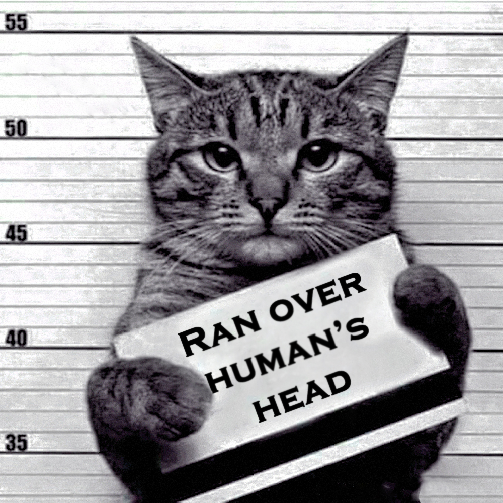 00 a feline recidivist 07 280516