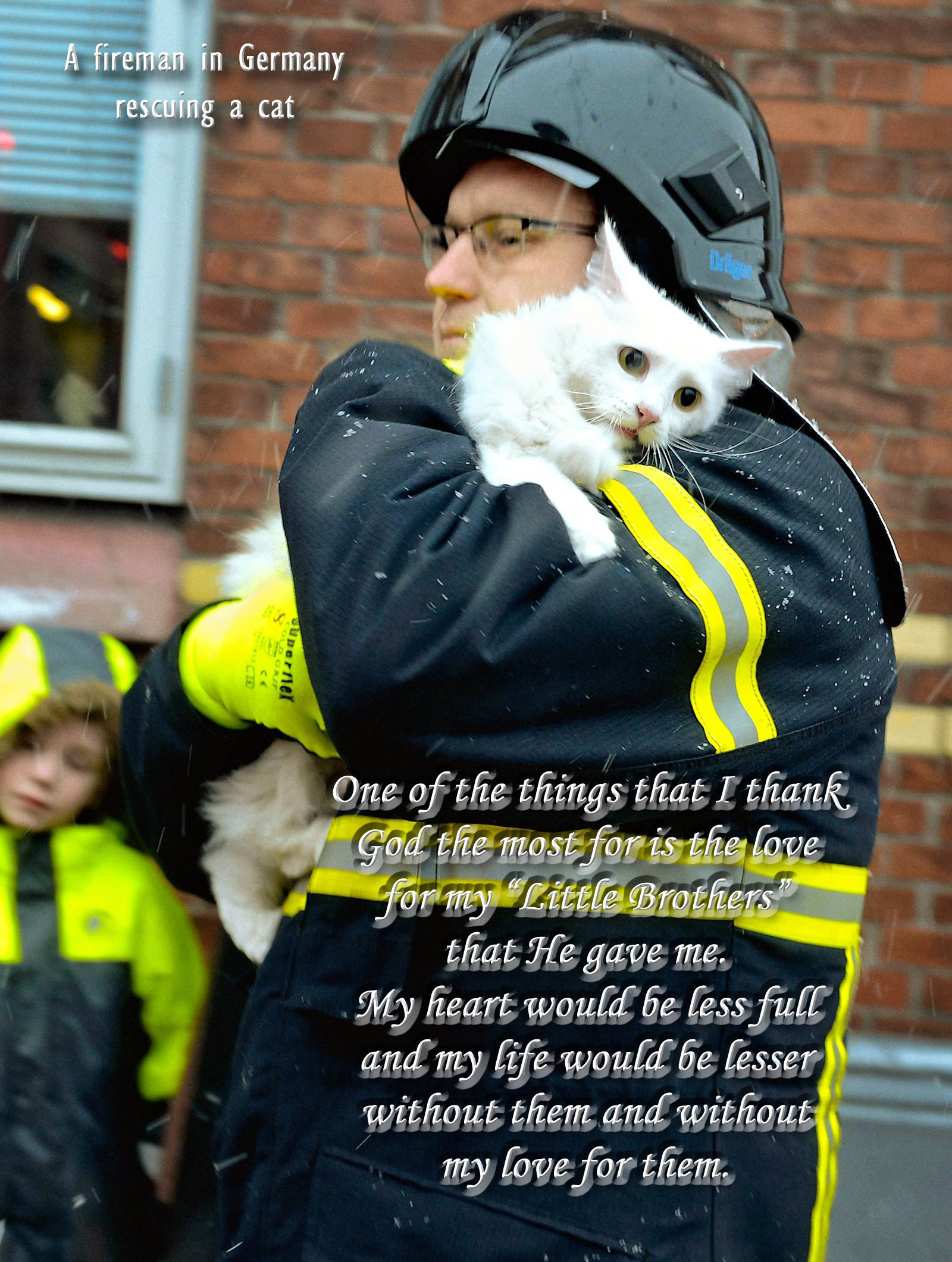 00 cat and fireman love for animals 290516
