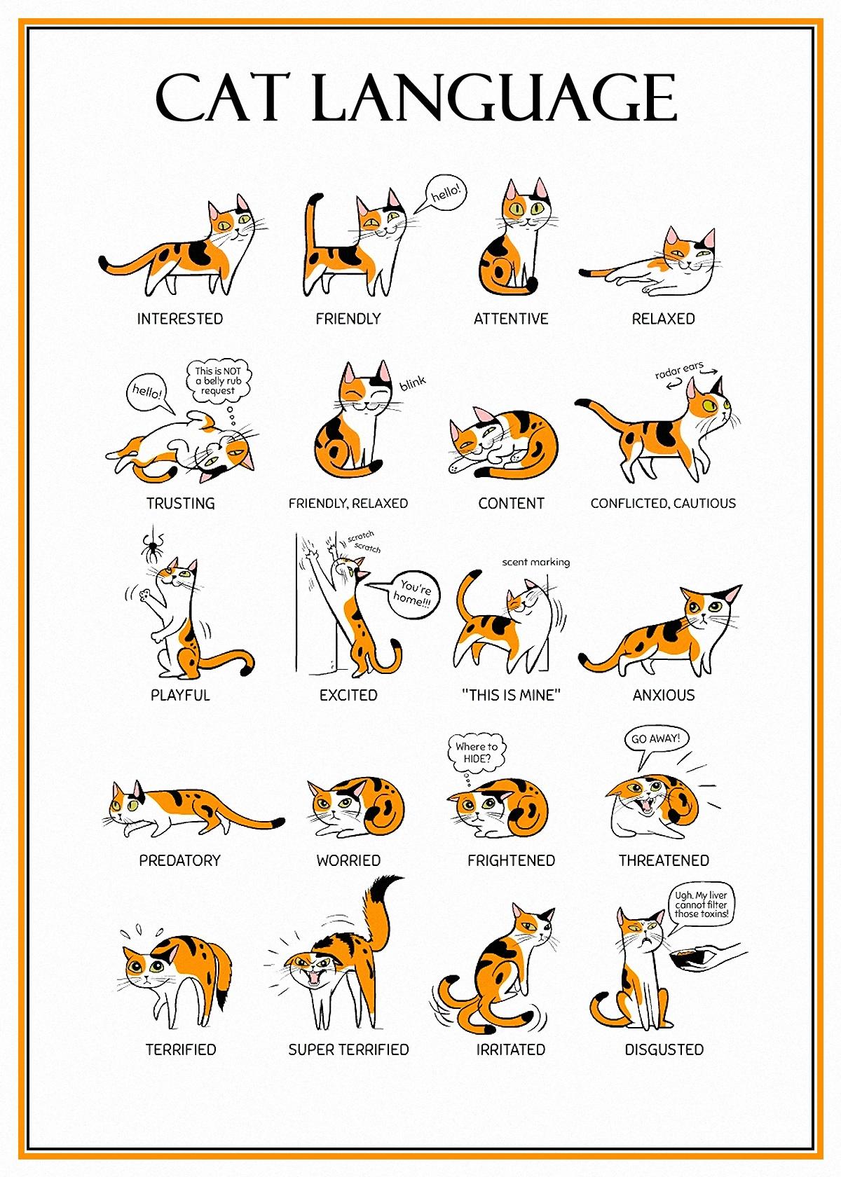 00 cat language 210516